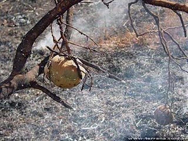 Resultado de imagem para queimadas animais